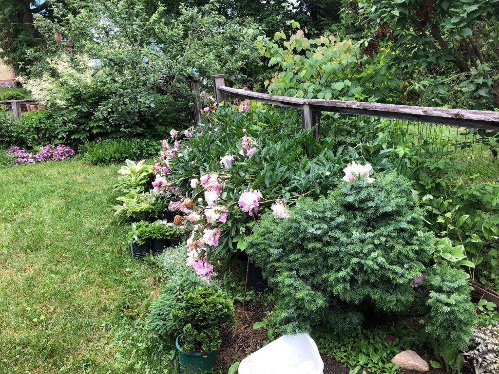 solstice garden